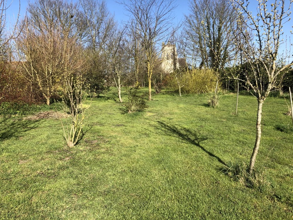 The garden in April 2020